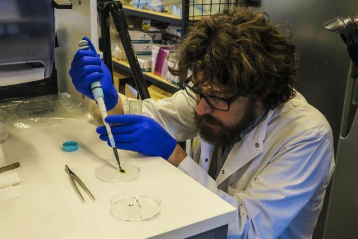 Da nhân tạo từ vi tảo, cung cấp oxi giúp vết thương mau lành