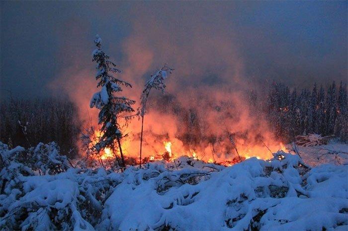 Đám cháy thây ma ở Bắc Cực hồi sinh từ băng giá