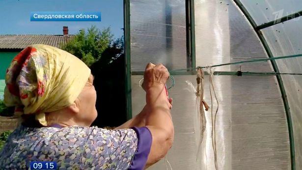 Dân miền núi Nga khốn đốn vì ruồi phủ kín bầu trời