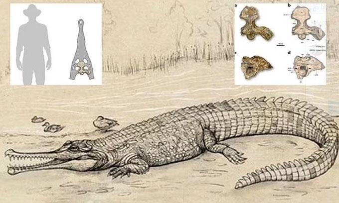 Đào được trùm cá sấu 5 triệu tuổi, to như xe buýt