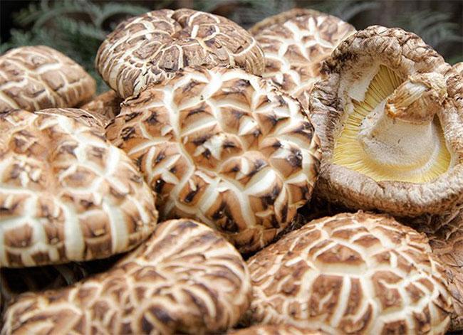 Đắt ngang nhân sâm, nấm hương Nhật Bản có gì đặc biệt?