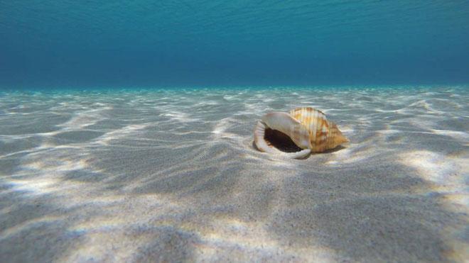 Đáy biển trên các đại dương có nguy cơ tan chảy theo đúng nghĩa đen luôn và lý do là gì?