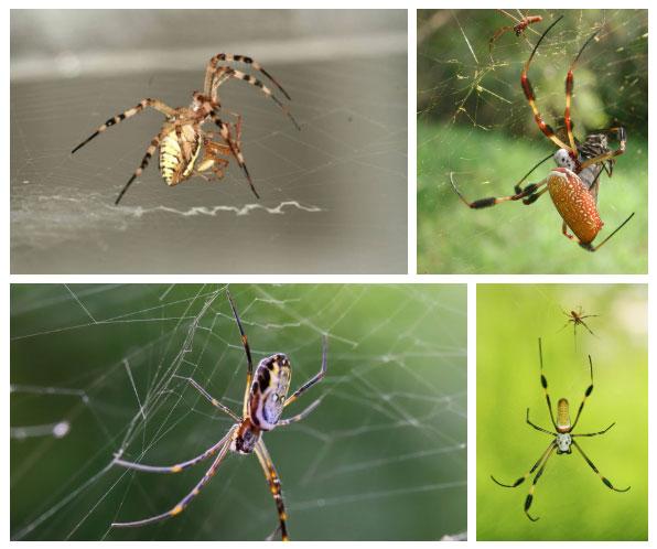 Đây là những loài vật sinh ra đã khổ như phải sống ở địa ngục trần gian