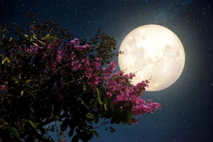 Đêm nay và mai, Việt Nam chiêm ngưỡng siêu trăng hồng kỳ ảo