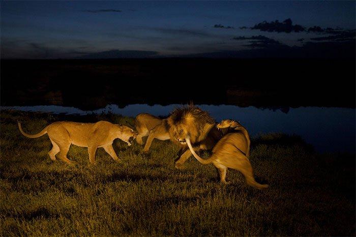 Đếm số - Một trong những kỹ năng sinh tồn quan trọng của động vật hoang dã