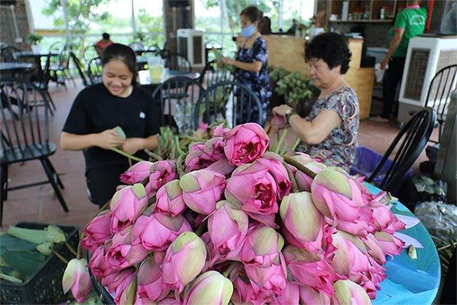 Đến thăm nơi bảo tồn các loài sen quý hiếm nhất của Việt Nam
