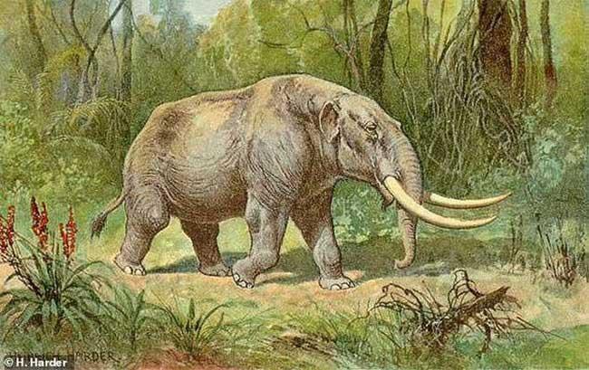 Đi chơi, bé 6 tuổi phát hiện hóa thạch quái thú kỷ băng hà