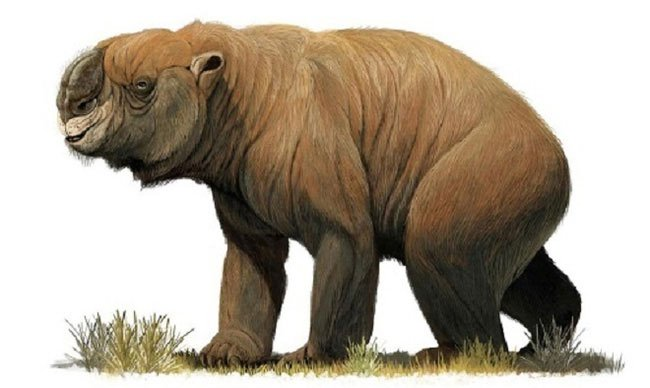 Đi tìm chỗ giải quyết nỗi buồn, người đàn ông phát hiện di tích lịch sử 49.000 năm tuổi theo cách không ai ngờ