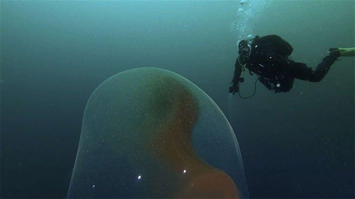 Đi tìm tàu đắm đụng độ quả cầu bí ẩn chứa trăm nghìn trứng mực