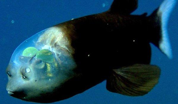 Điều gì đã giúp các loài cá vùng biển sâu chịu được áp lực nước lên đến hàng ngàn tấn trên mỗi mét vuông?