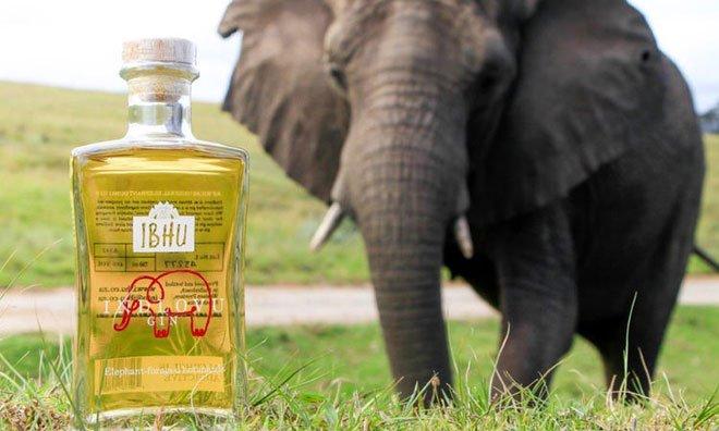 Độc đáo loại rượu làm từ phân voi châu Phi