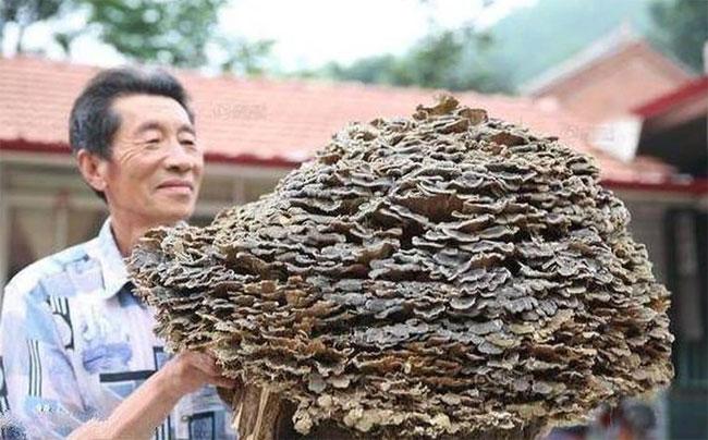 Được trả tiền tỷ để mua lại vật thể khổng lồ, lão nông khiến cả làng ngơ ngác khó hiểu vì hành động lạ