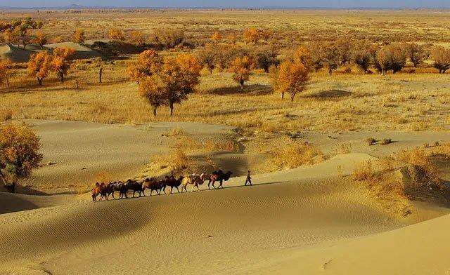 Đường cao tốc giữa sa mạc lớn nhất Trung Quốc dài 136km