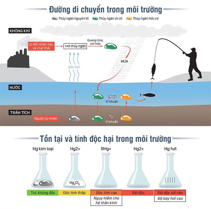 Đường di chuyển của thủy ngân trong môi trường