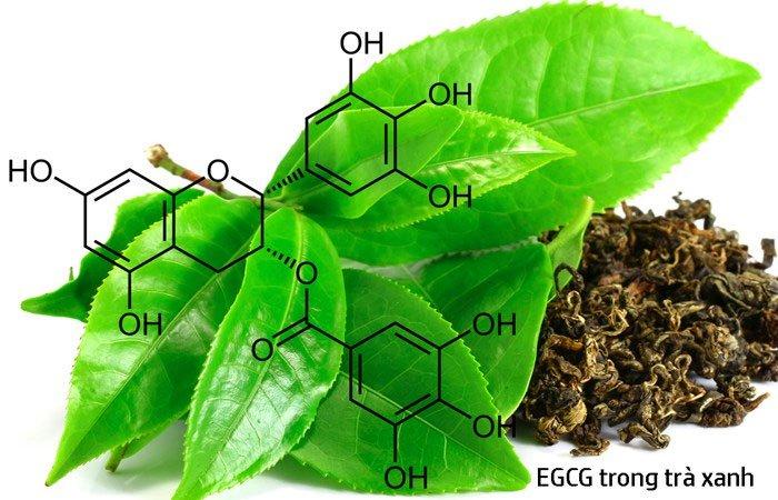 EGCG là gì và tác dụng của EGCG
