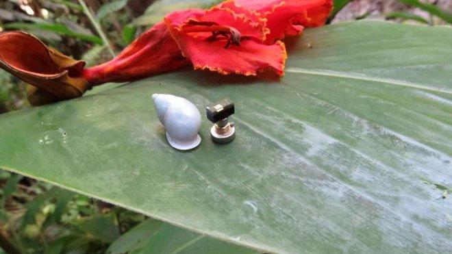 Gắn máy tính nhỏ nhất thế giới trên lưng một con ốc sên, phát hiện ra bí quyết sinh tồn độc đáo