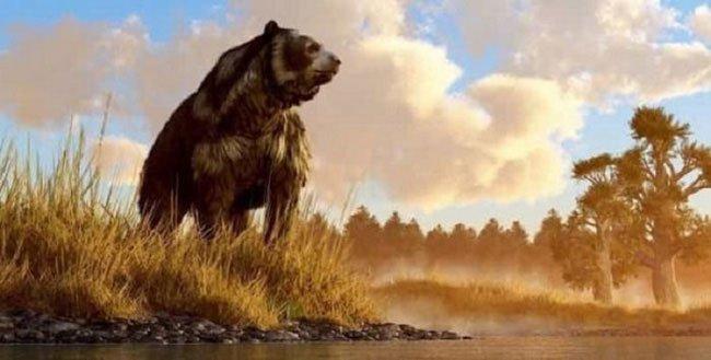 Gấu nâu khổng lồ nhất thế giới cao 4,5m nặng 1,5 tấn: Sự thực hay chỉ là lời nói dối?