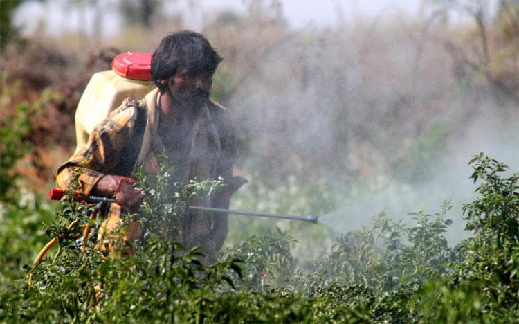 Gel sinh học giúp ngăn chặn hiểm họa phơi nhiễm thuốc trừ sâu