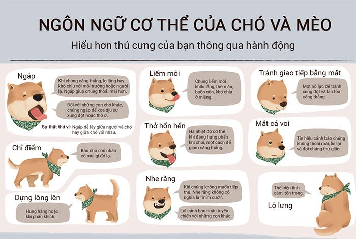 Giải mã ngôn ngữ cơ thể của chó và mèo
