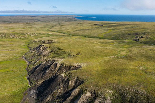 Giới khoa học lo ngại vì cỏ dại ngày càng nhiều ở Bắc Cực