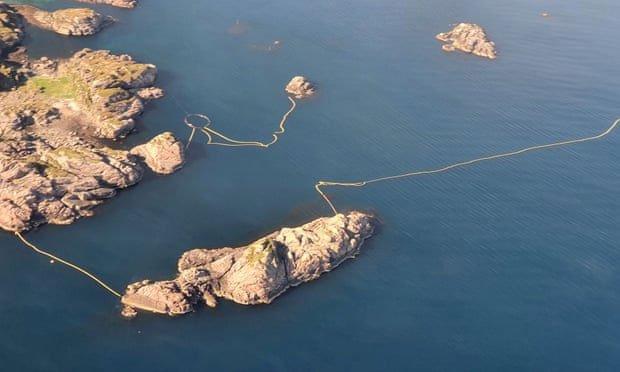 Giới khoa học phẫn nộ vì thí nghiệm tàn nhẫn lên cá voi minke ở Na Uy