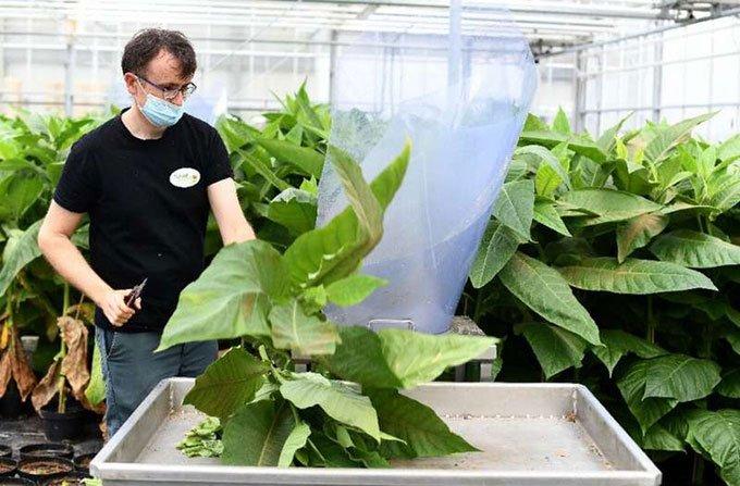 Giới thiệu về trang trại nhân giống côn trùng thiên địch