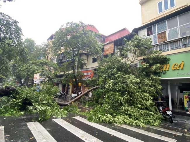 Hà Nội: Bão số 7 gây mưa lớn cả ngày, nhiều cây xanh bật gốc, đè bẹp xế hộp Camry