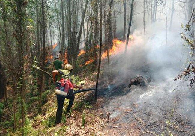 Hà Tĩnh xảy ra cháy rừng, hàng trăm người dập lửa dưới trời nắng nóng