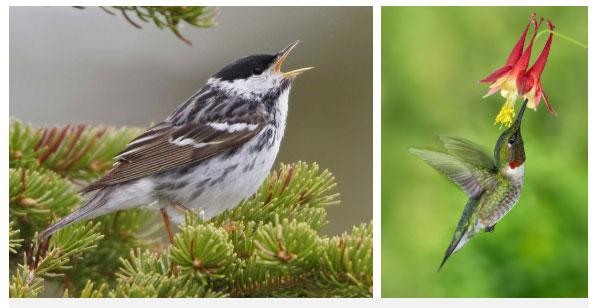 Hai loài chim có khả năng siêu dị: Ăn gấp đôi trọng lượng cơ thể và lý do là...