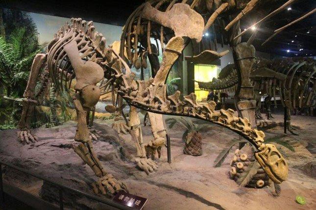 Hải quan Italy thu giữ được quả trứng khủng long 159 triệu năm tuổi