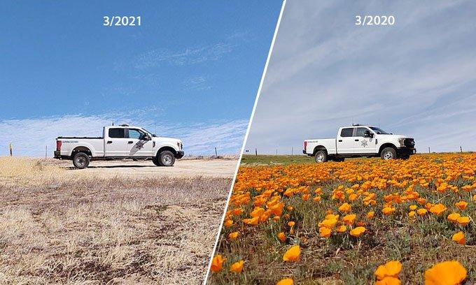 Hạn hán đe dọa hiện tượng siêu nở hoa