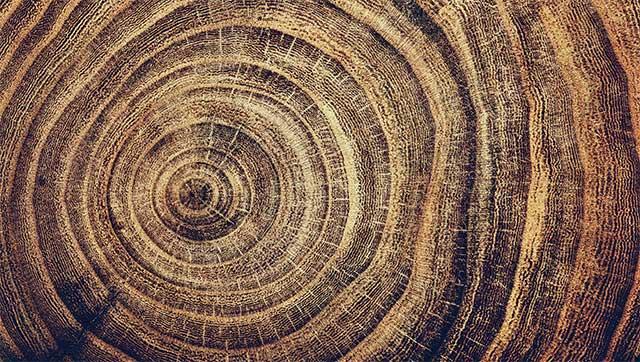 Hàng trăm năm lịch sử gói lại trong vân gỗ cảnh báo nguy cơ xảy đến với hệ thống nông nghiệp Nam Mỹ