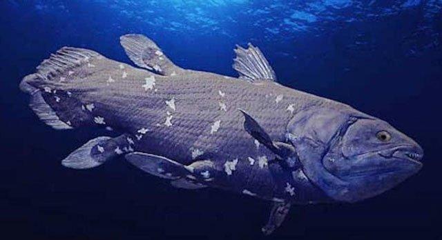 Hé lộ bí mật của cá hóa thạch sống châu Phi