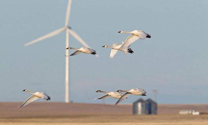 Hệ thống camera ngăn cánh turbine gió đập trúng chim