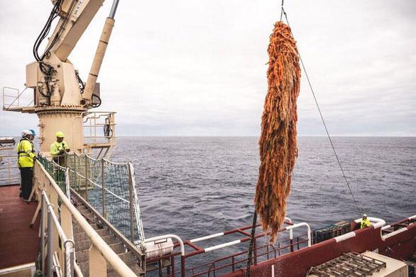 Hệ thống dọn rác đại dương 20 triệu USD thất bại sau 2 tháng?
