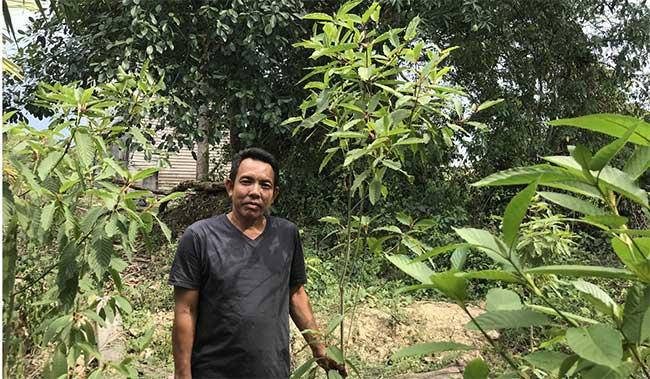 """""""Heroin thảo dược - sinh kế của nông dân Indonesia"""