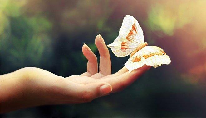 Hiệu ứng cánh bướm là sai, các nhà khoa học đã chứng minh được điều này ở cấp độ lượng tử