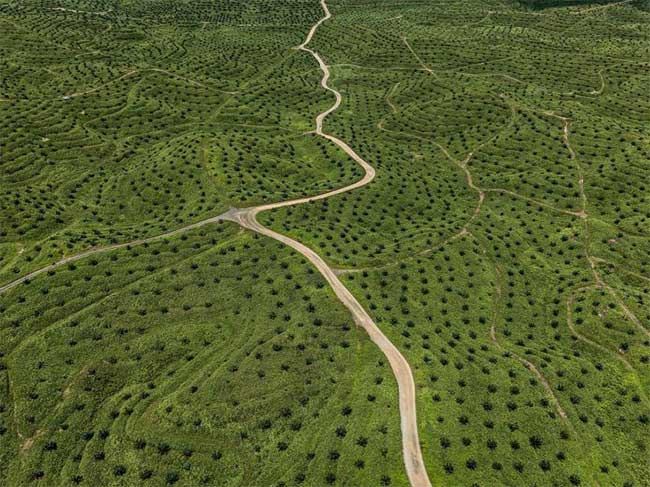 Hình ảnh ấn tượng cho thấy con người đang biến đổi Trái Đất thế nào