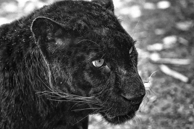Hình ảnh động vật dễ thương (Phần 1)