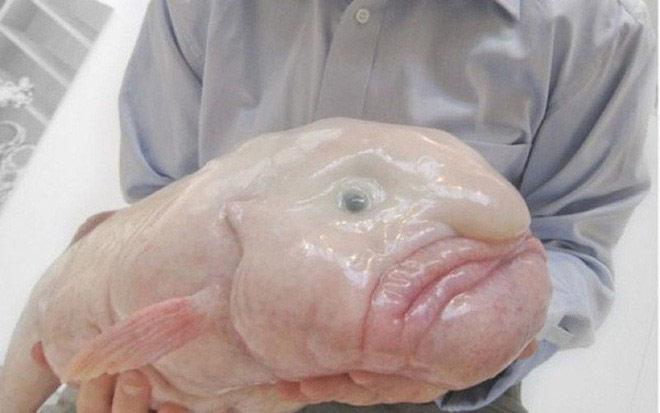 Hóa ra từ trước đến nay chúng ta đã bị con cá xấu nhất hành tinh này lừa rồi