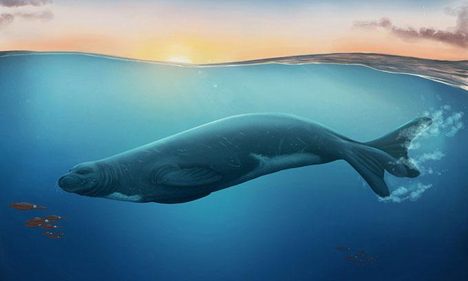 Hóa thạch 3 triệu năm tuổi tiết lộ loài hải cẩu không tai