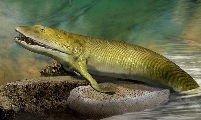 Hóa thạch 380 triệu năm của cá đi bộ trên cạn