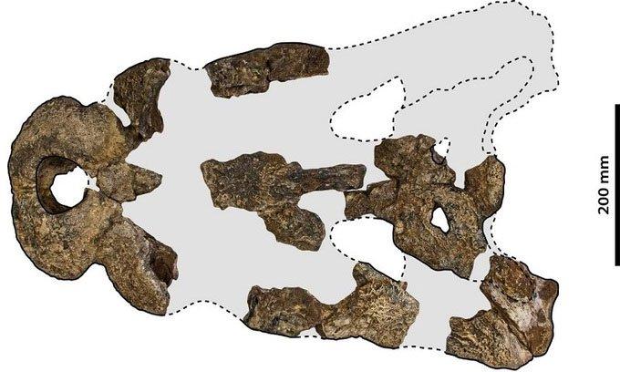 Hóa thạch 5 triệu nămcủa cá sấu vua đầm lầy ở Australia