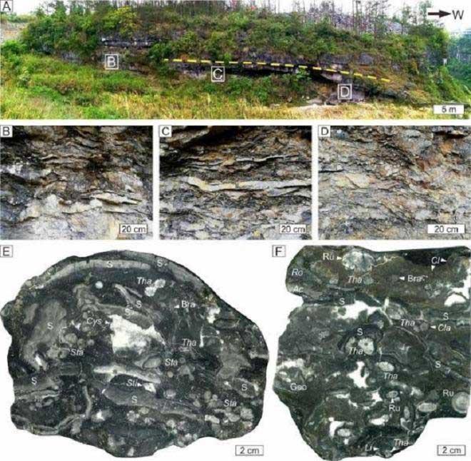 Hóa thạch sinh vật biển 385 triệu năm tuổi trong rạn san hô ở Trung Quốc