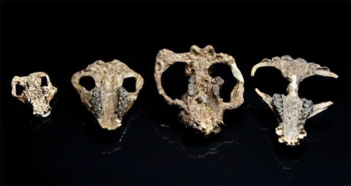 Hoá thạch tiết lộ thông tin sự sống tái sinh trên Trái đất sau khủng long tuyệt chủng