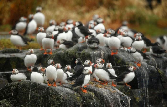 Hòn đảo có loài chim vừa trở về từ cõi chết khiến giới khoa học vui mừng khôn xiết