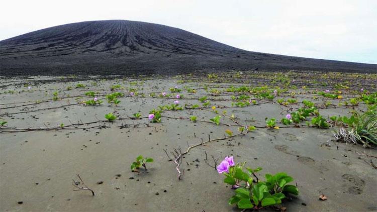Hòn đảo mới ra đời 4 năm trước vậy mà nay đã khiến giới khoa học phải ngạc nhiên