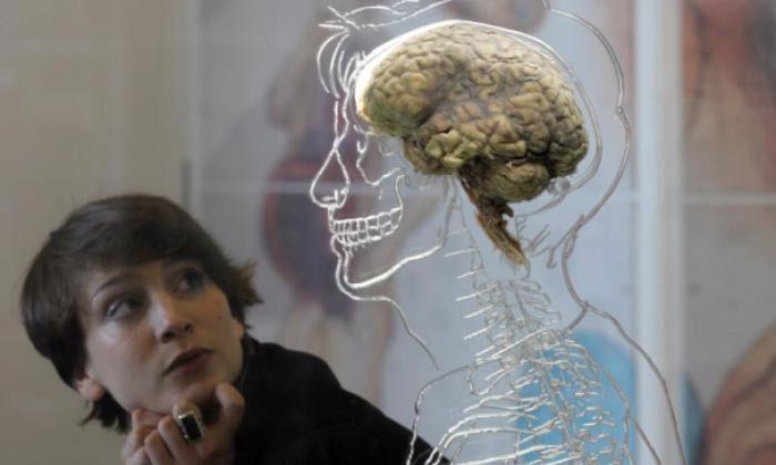 Hộp sọ của mỗi chúng ta đề có tócvà lý do chúng tồn tại thực sự rất quan trọng