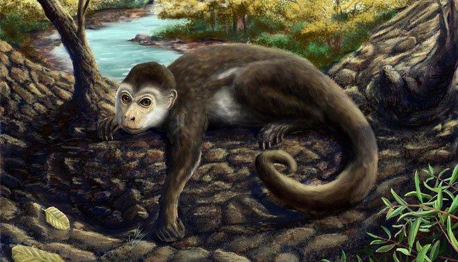 Hộp sọ kì lạ của loài khỉ cổ đại tiết lộ bí mật về cách thức bộ não của các loài linh trưởng phát triển
