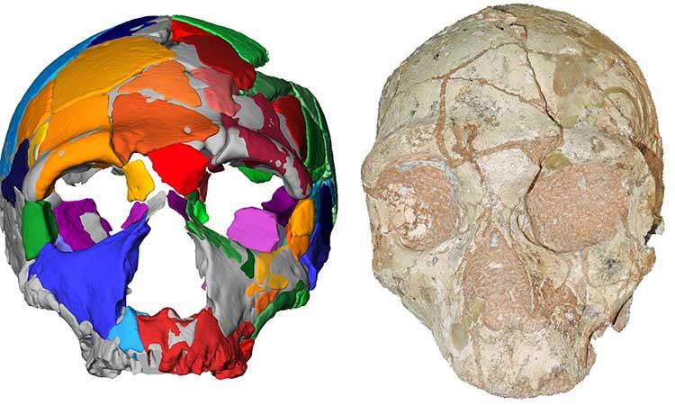 Hộp sọ người hiện đại lâu đời nhất ngoài châu Phi